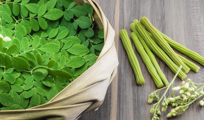 خواص گیاه مورینگا چیست