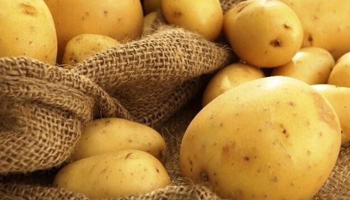 تاثیر سیب زمینی بر درمان سیاهی زانو