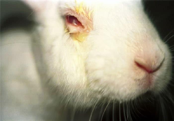 تست حیوانی محصولات آرایشی چیست
